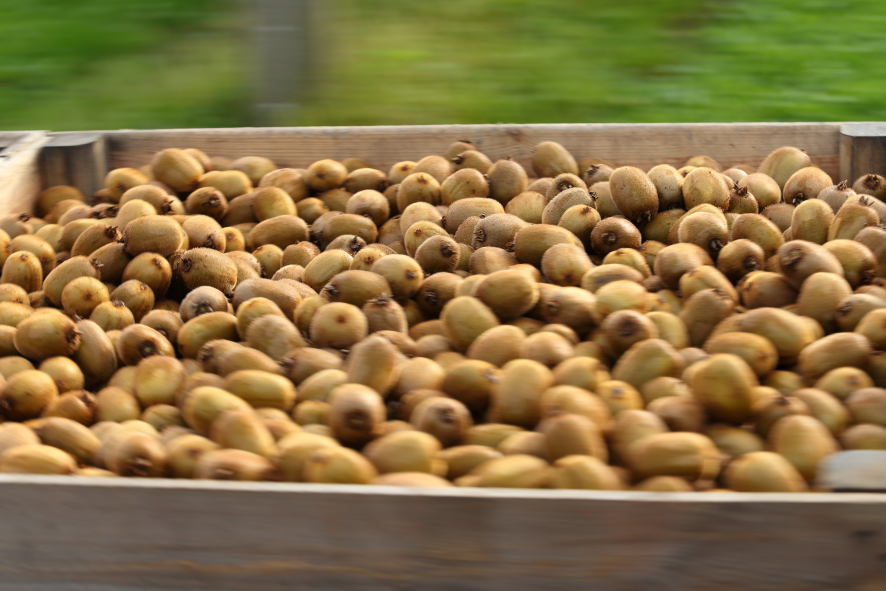 Our Chilean kiwifruit is already on your plate!