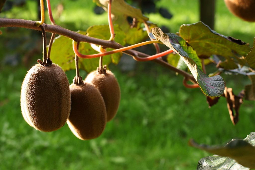 Oscar® Kiwi ready for a new season